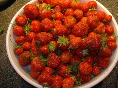 Strawberry field experiment